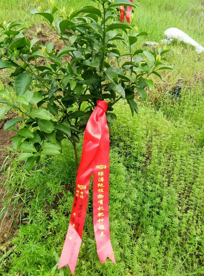 5月施肥季_05.png